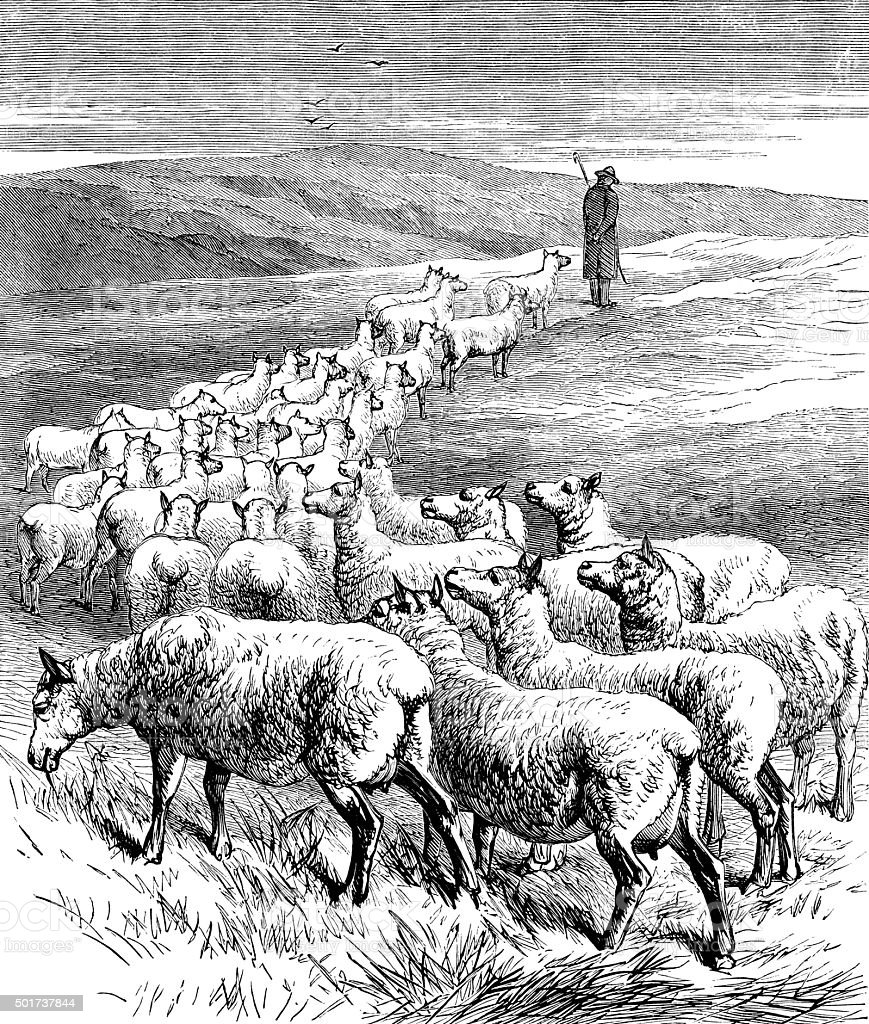 Shepherd with a flock of sheep vector art illustration