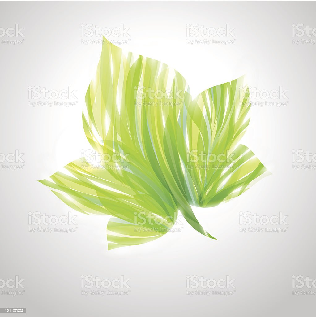 Shiny green striped maple leaf. royalty-free stock vector art