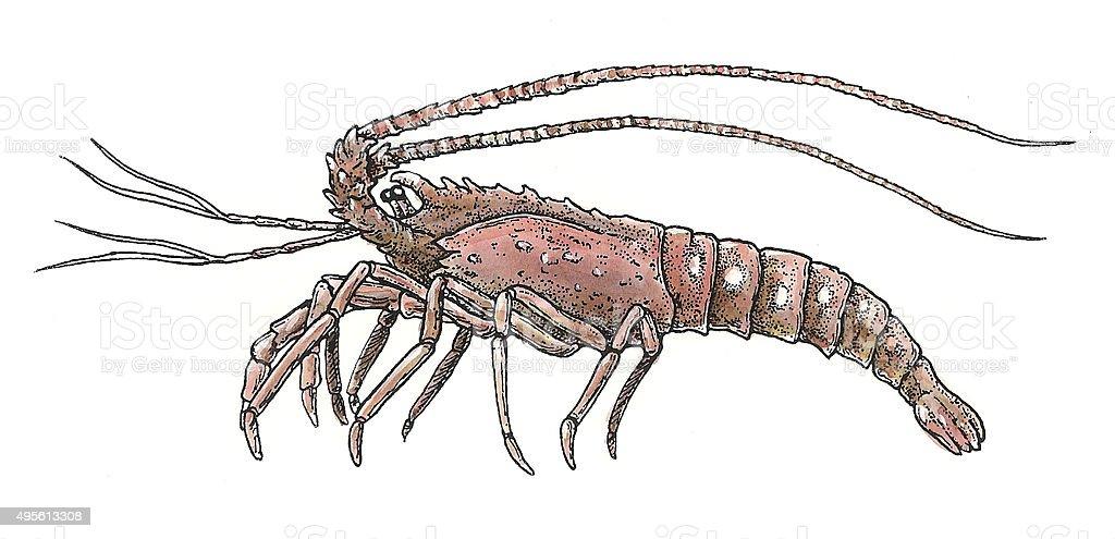 Shrimp Lizenzfreies vektor illustration