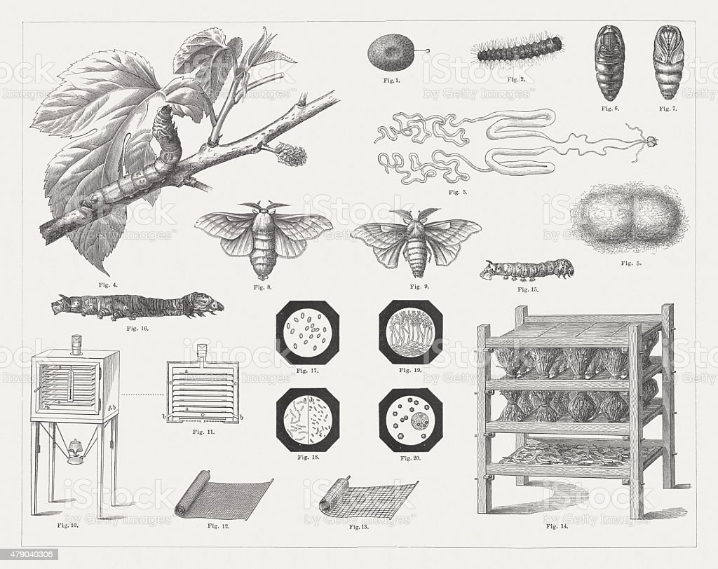 Silk culture, wood engravings, published in 1878 vector art illustration