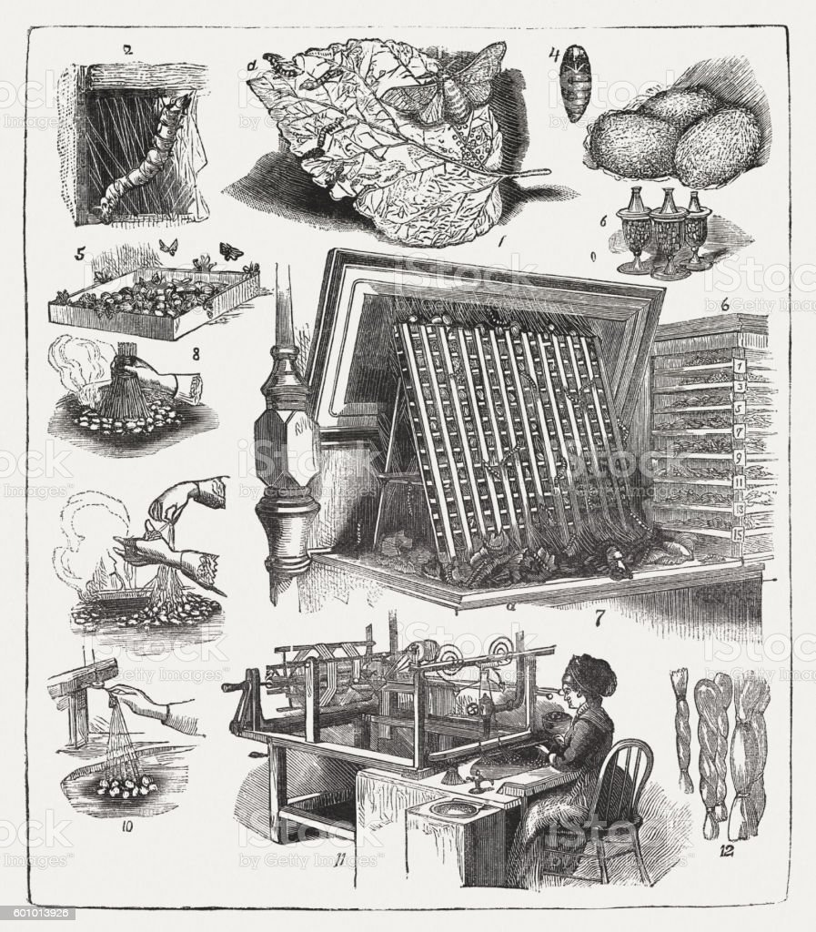 Silk production, wood engraving, published in 1877 vector art illustration