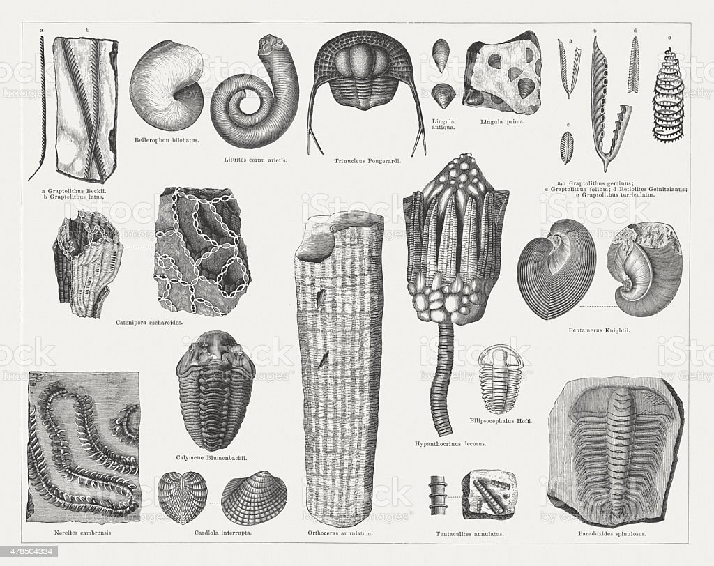 Silurian fossils, wood engravings, published in 1878 vector art illustration
