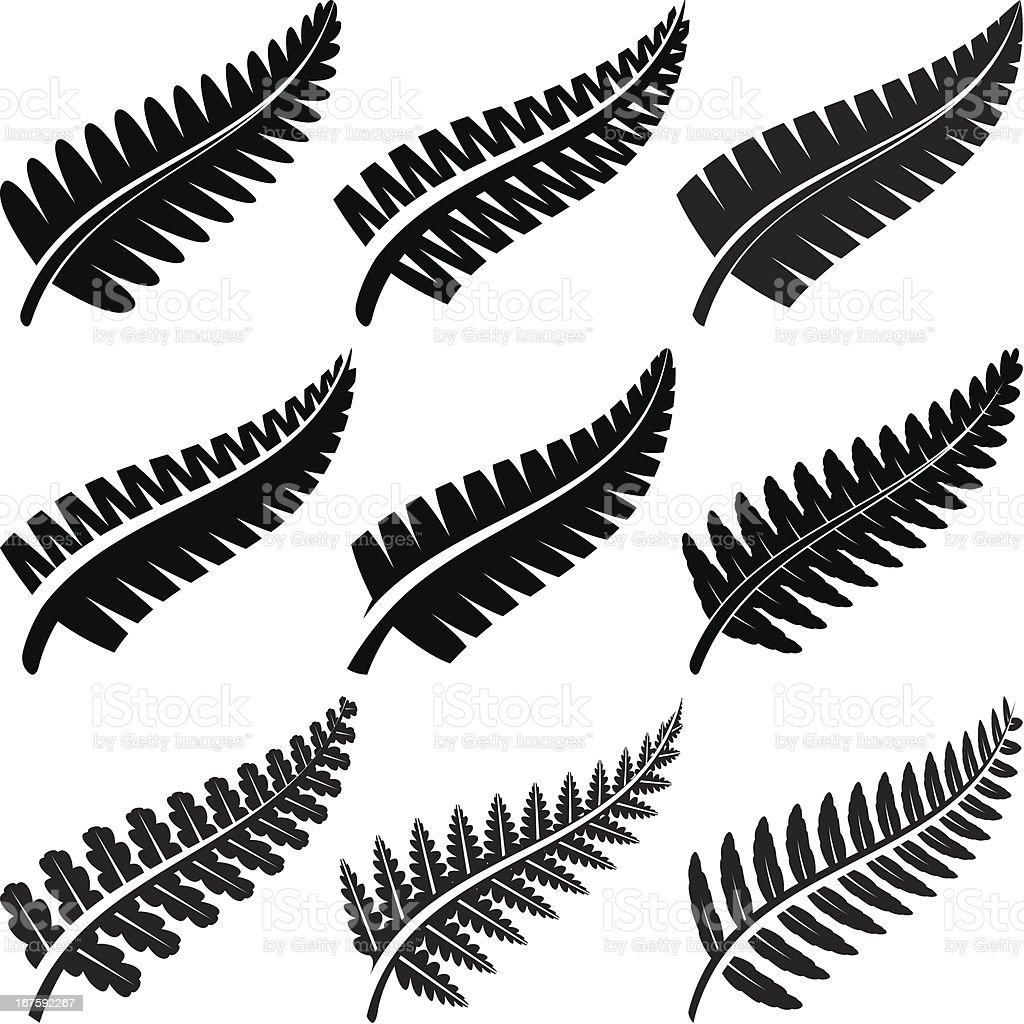 Silver Ferns vector art illustration