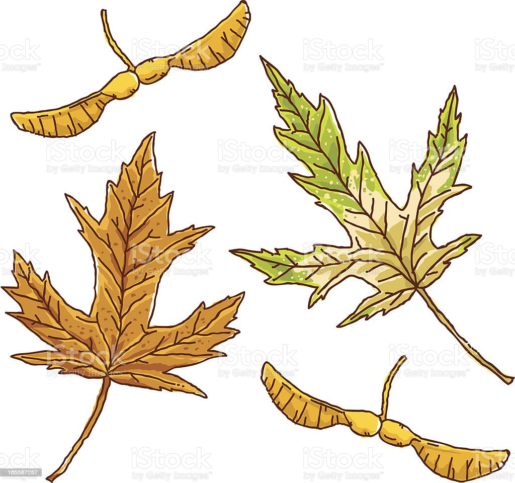 Silver Maple Leaves royalty-free stock vector art