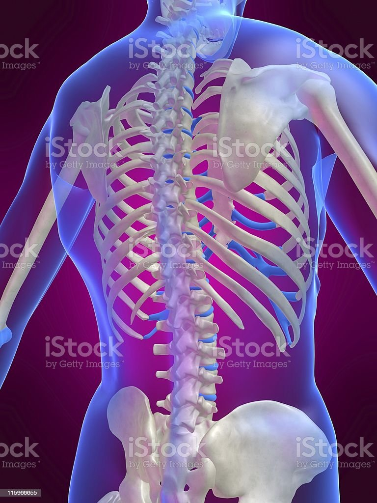 skeletal back royalty-free stock vector art