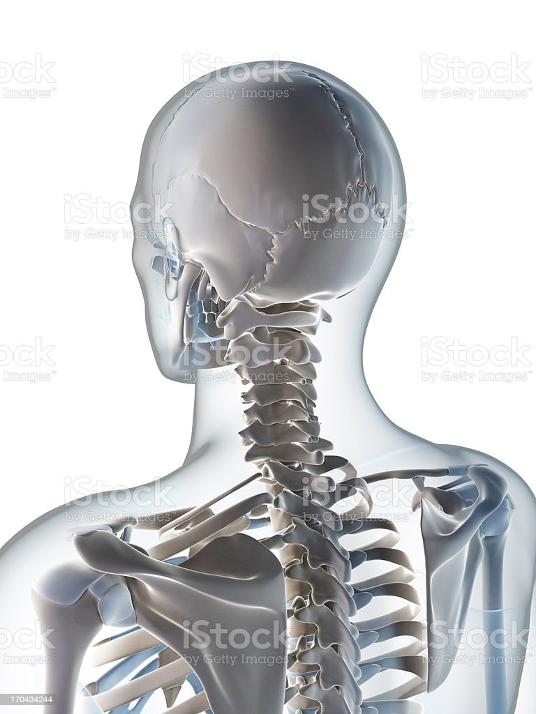 skeletal neck royalty-free stock vector art