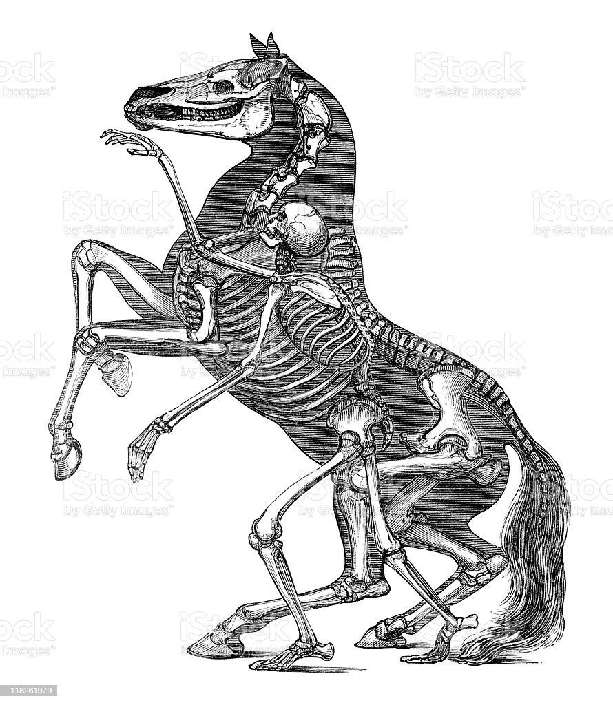 Skeleton of Horse and Man in Antique Engraving vector art illustration