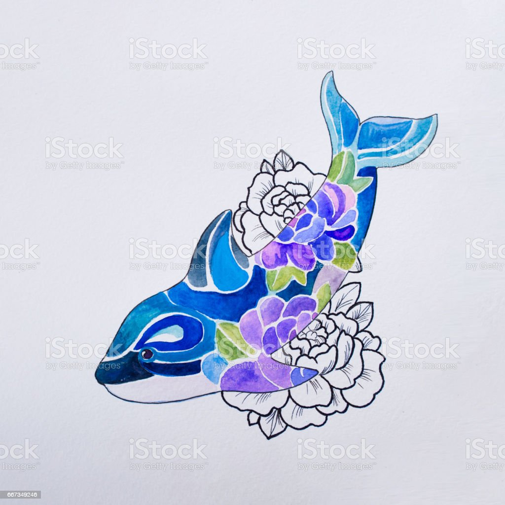sketch killer whale in colors on a white background stock vector