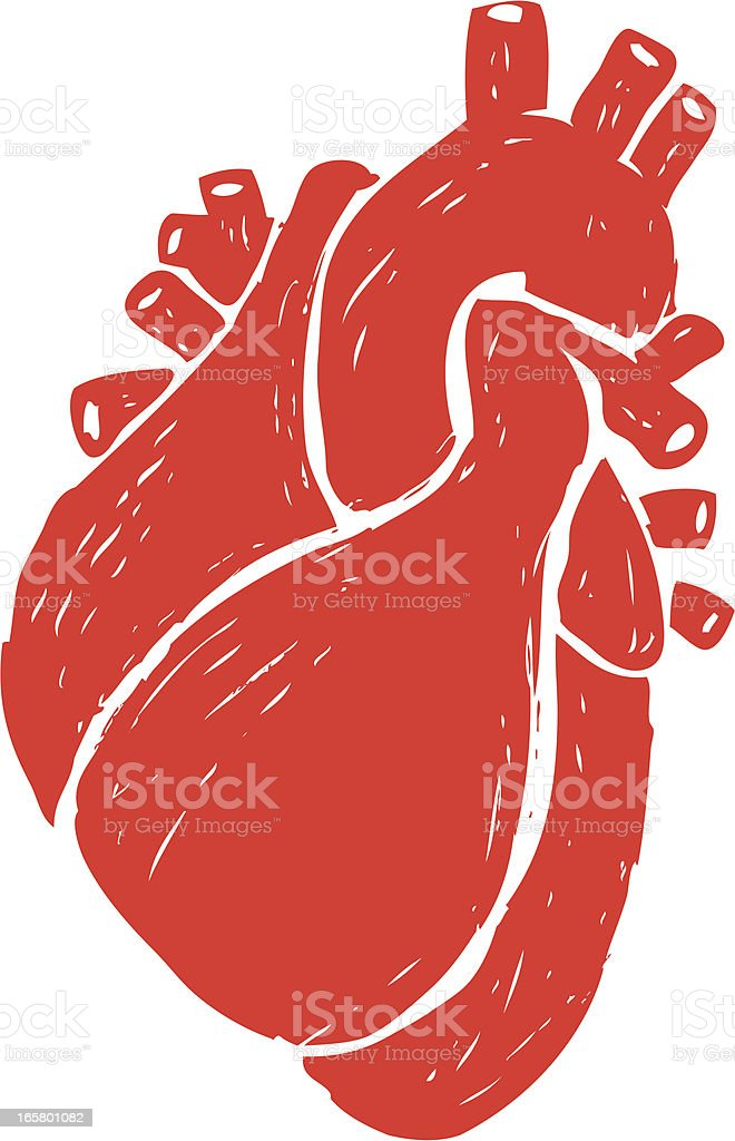 sketched human heart vector art illustration
