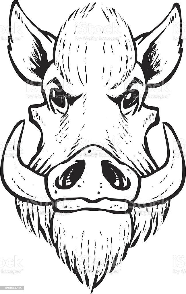 sketchy boar head royalty-free stock vector art