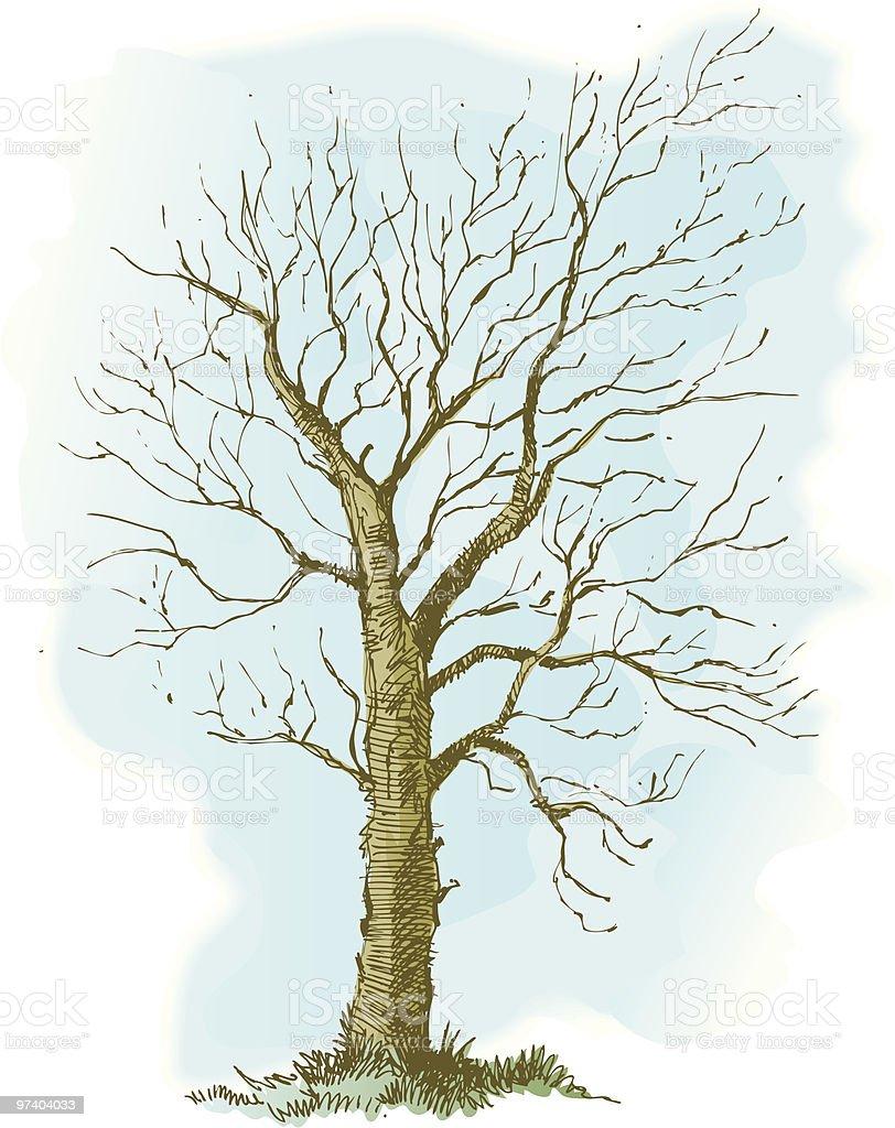 Sketchy winter tree. royalty-free stock vector art