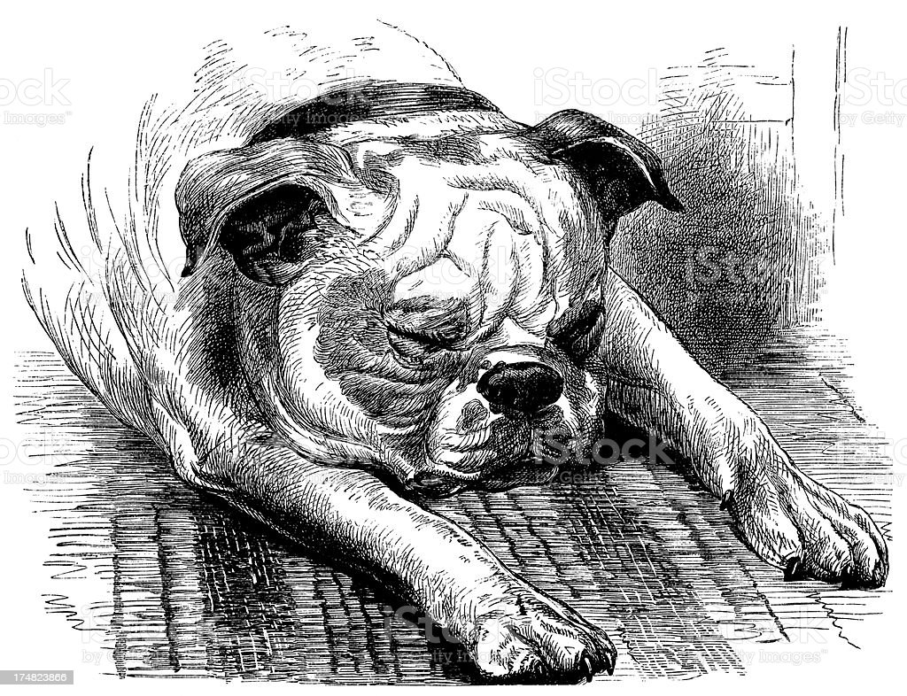 Sleeping bulldog royalty-free stock vector art