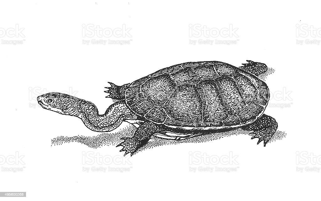Snake auffällige Turtle Lizenzfreies vektor illustration