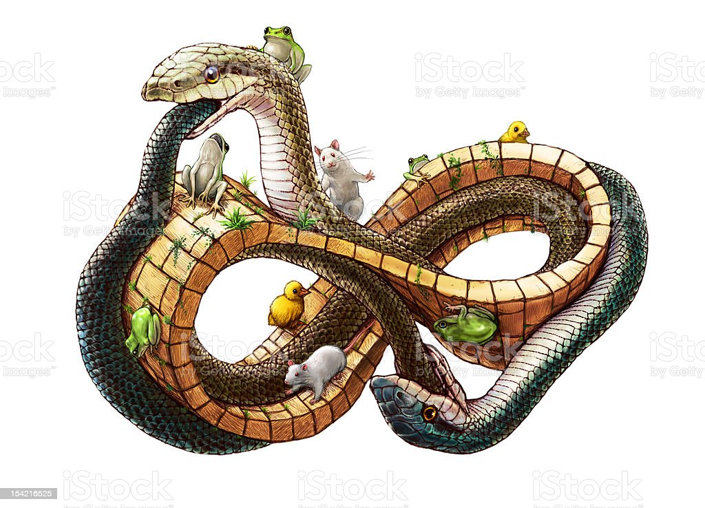 Snakes on  the ring of mebius.(white background) vector art illustration
