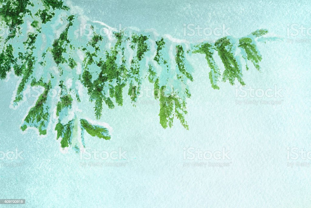 snowy spruce branch, watercolor vector art illustration
