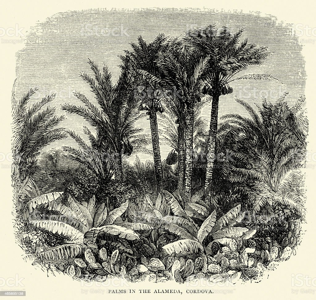 Spanish Pictures - Palms in the Alameda, Cordova vector art illustration