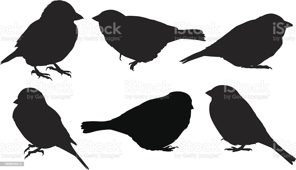 Sparrow silhouettes royalty-free stock vector art