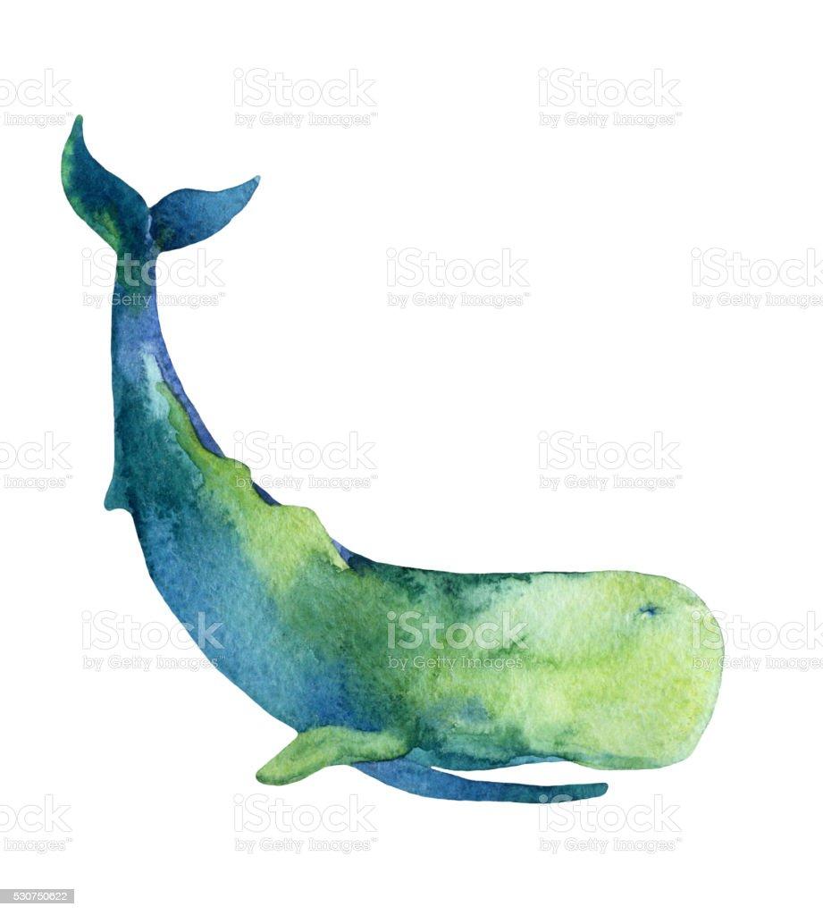 Sperm Whale isolated on white background vector art illustration