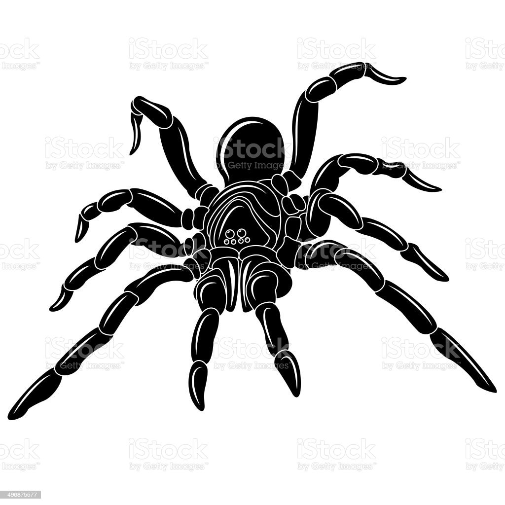 Spider vector art illustration