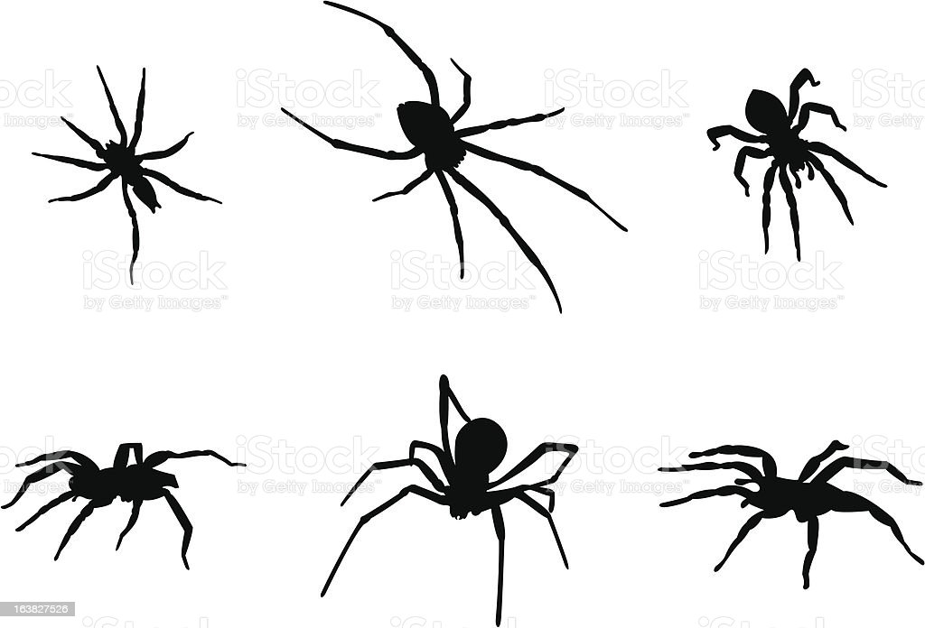 black widow spider silhouette - photo #23