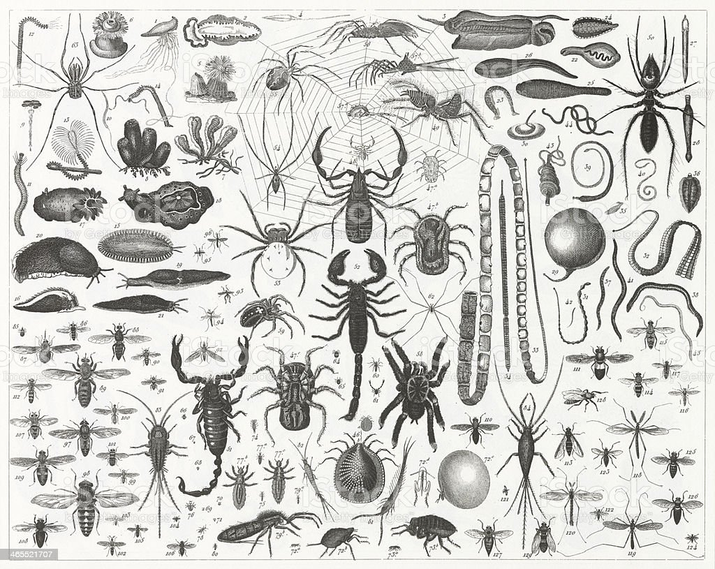 Spiders, Bees & Scorpions Engraving vector art illustration