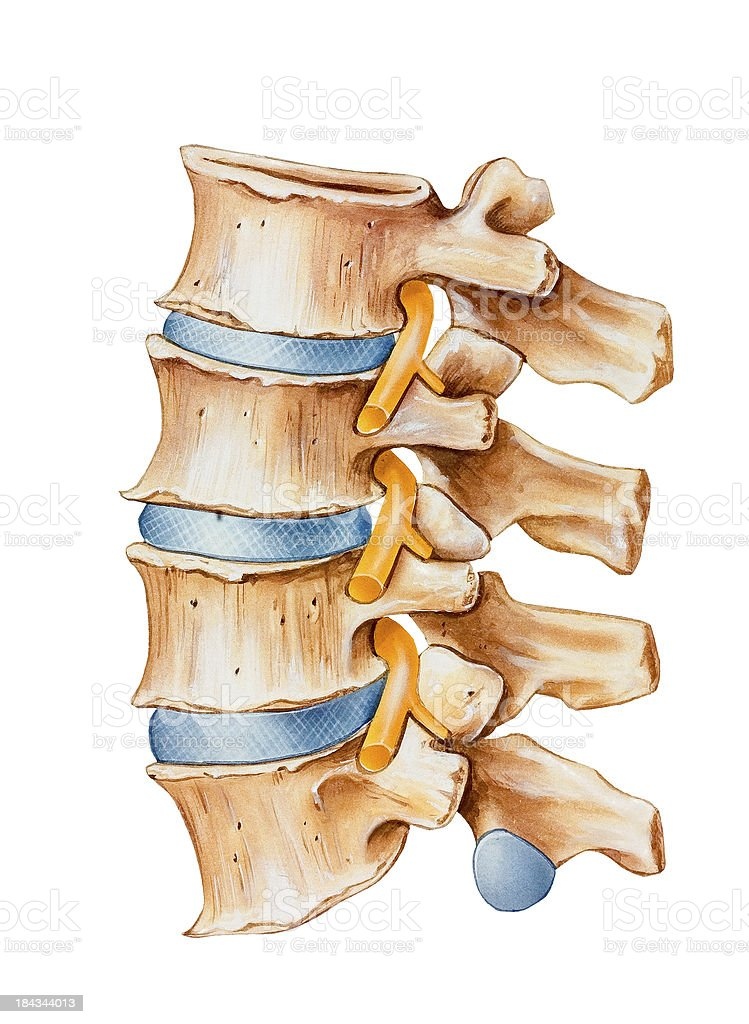 Spine - Spinal Nerve Irritation royalty-free stock vector art