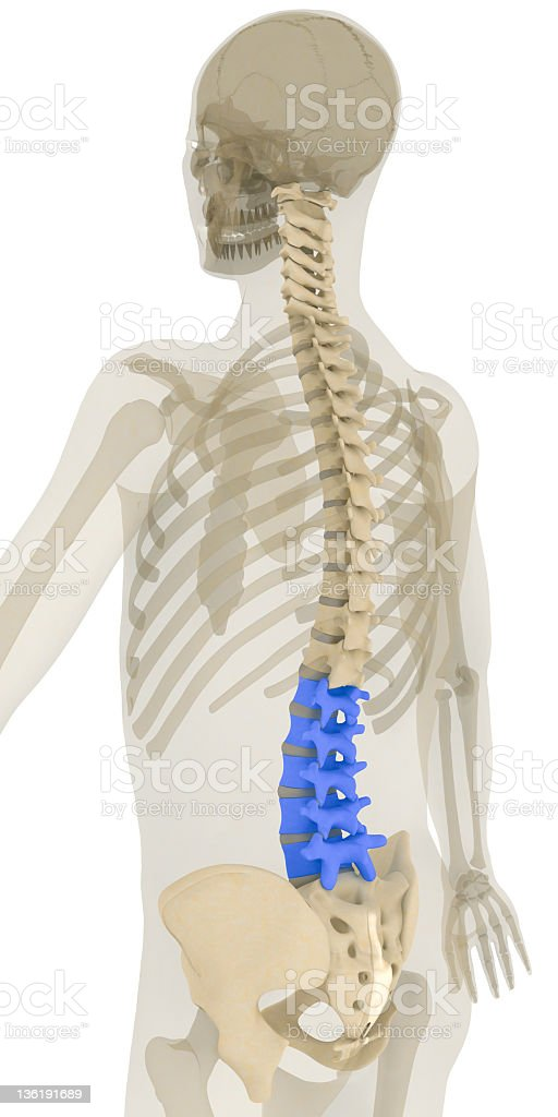 Spine-lumbar vertebrae highlighted royalty-free stock vector art