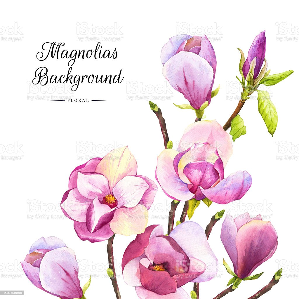 Spring background with purple watercolor magnolia. vector art illustration