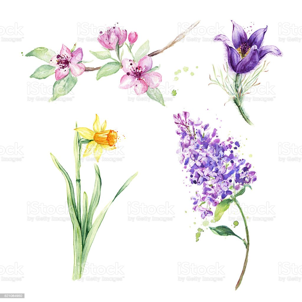 Spring floral set. Collection with spring flowers, anemone, daffodil, lilac vector art illustration