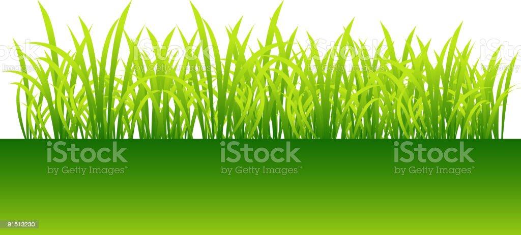 Spring, green grass for your design vector art illustration