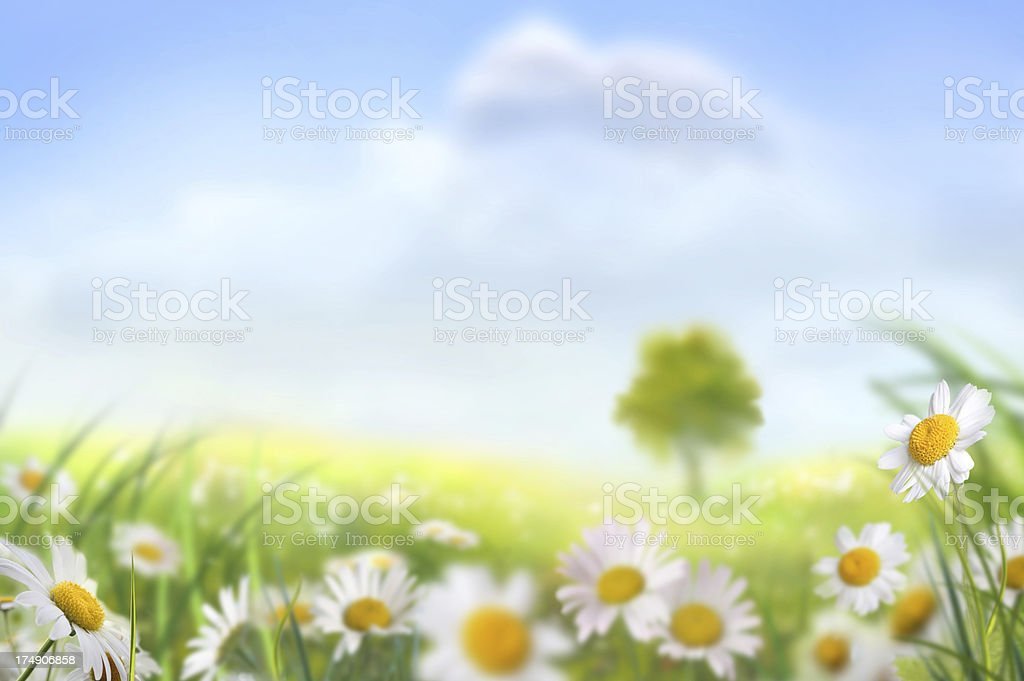 Spring Meadow With A Lone Tree vector art illustration