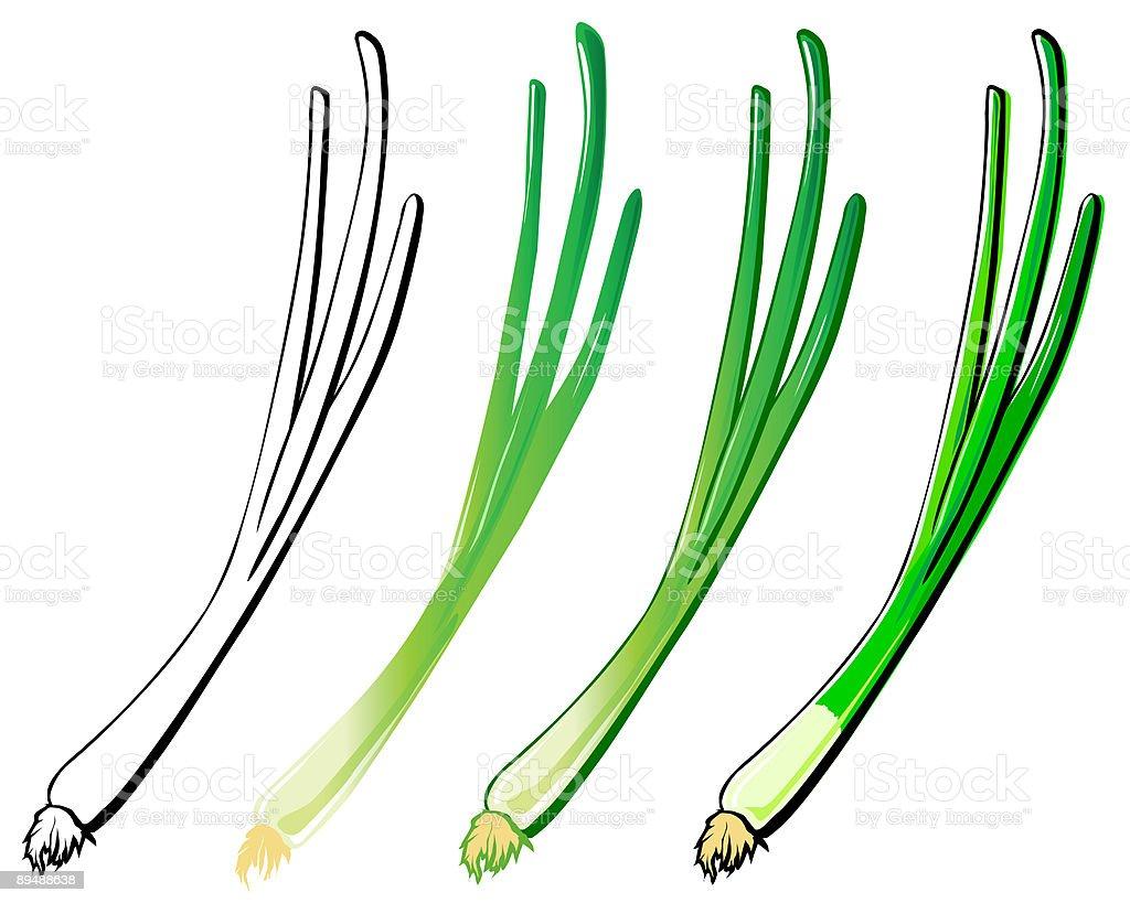 Spring Onion vector art illustration