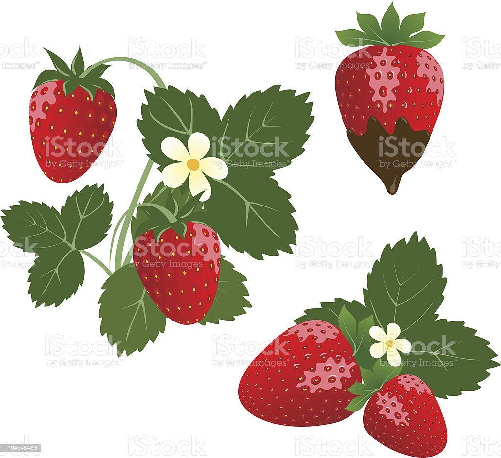 Srawberry royalty-free stock vector art