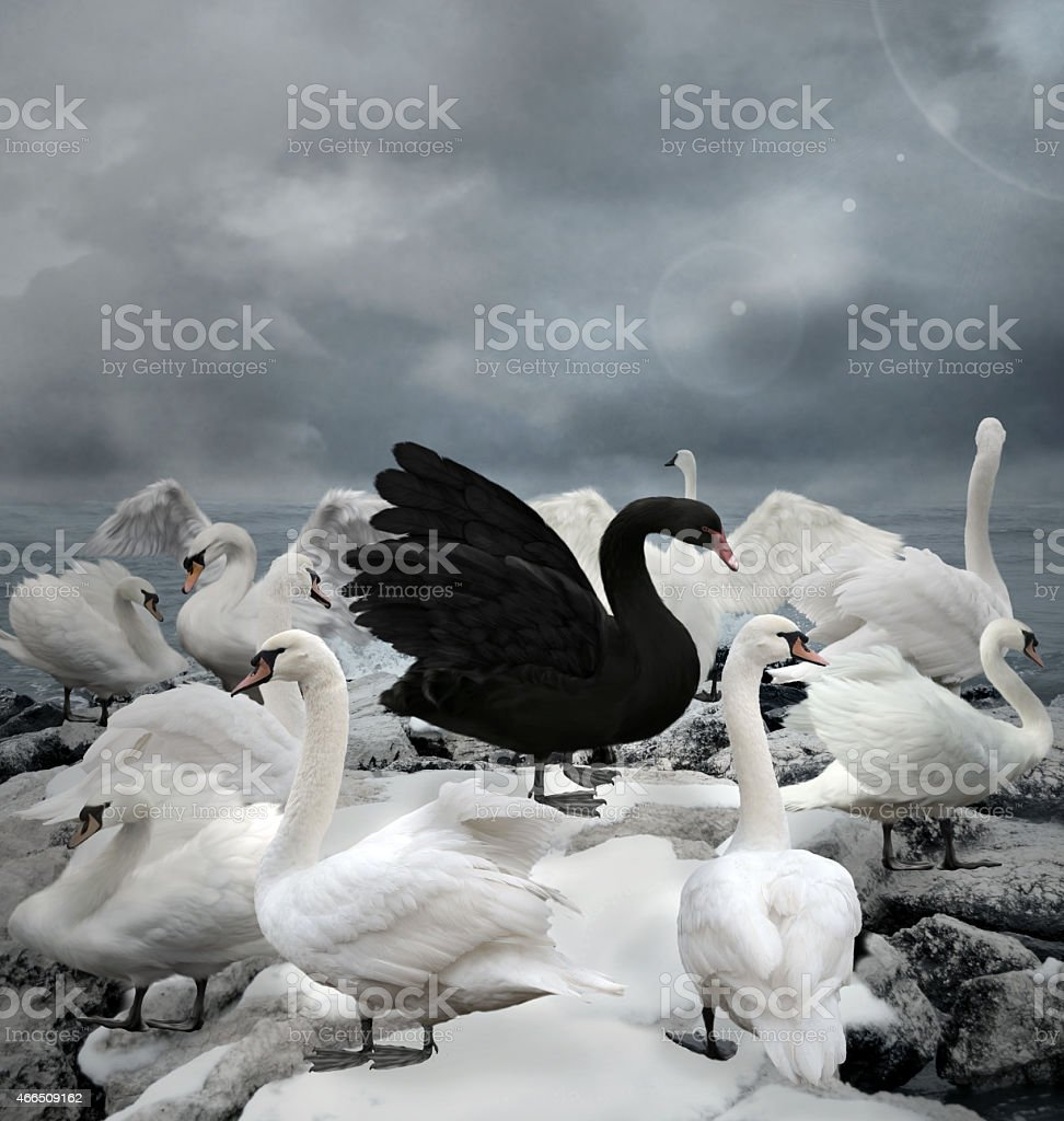 Stand out of the crowd - The black swan vector art illustration