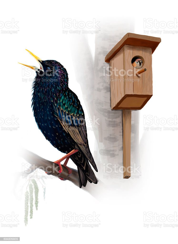 Starling with nesting box and sparrow on white background. vector art illustration