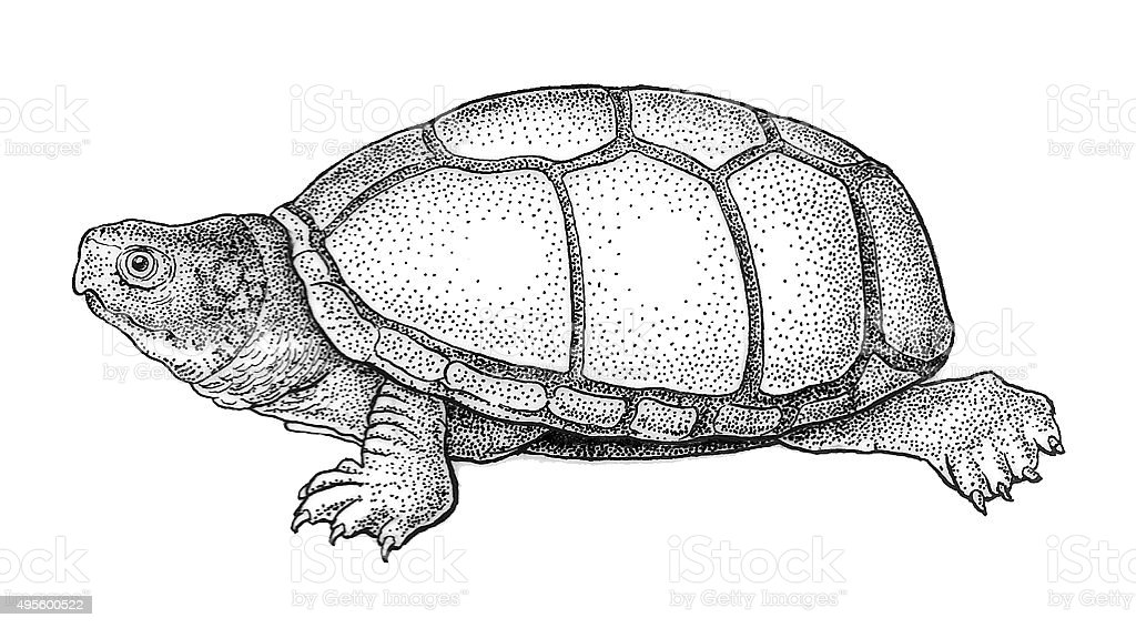 Geruch Pot Turtle Lizenzfreies vektor illustration