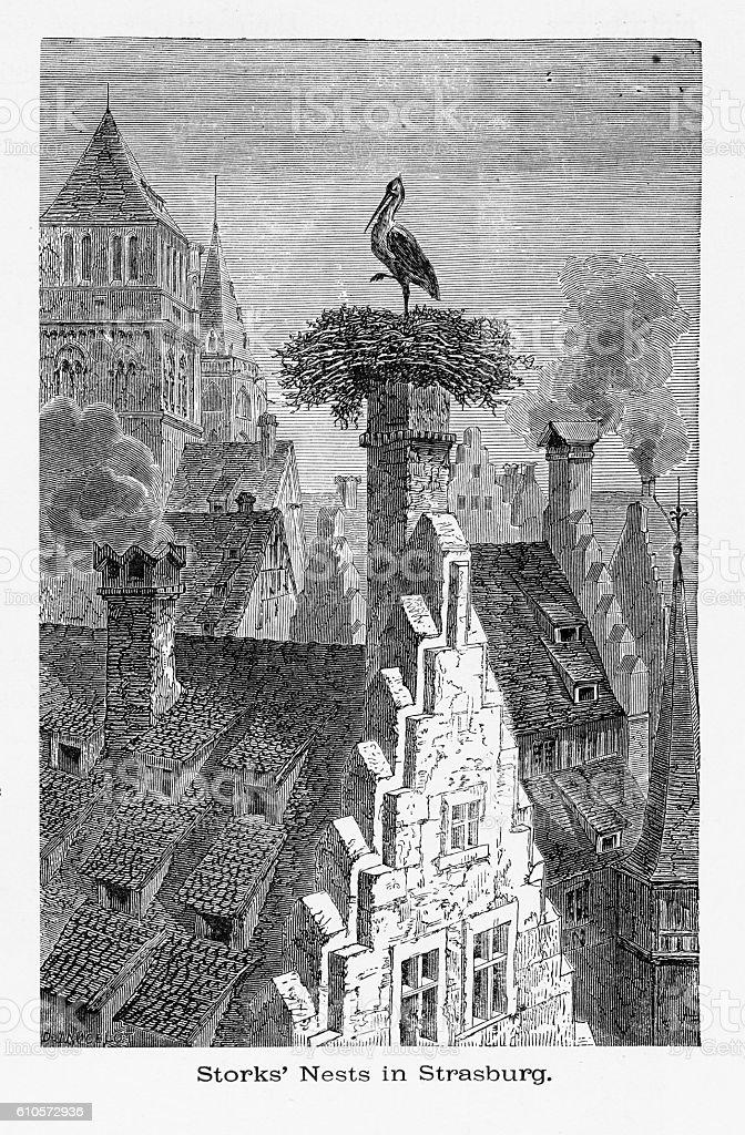 Storks Nesting on Chimneys in Strasburg, Strasbourg, Germany, Circa 1887 vector art illustration