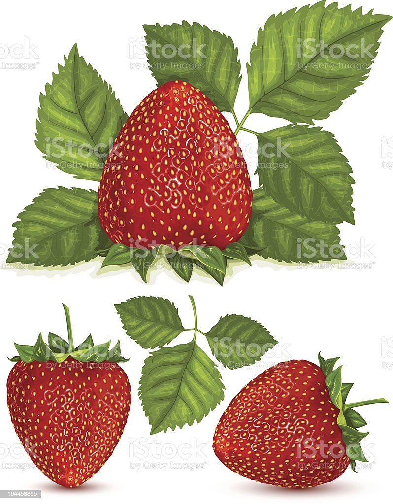 Strawberries with leaves. vector art illustration