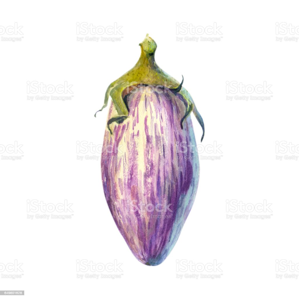 Striped eggplant isolated watercolor illustration vector art illustration
