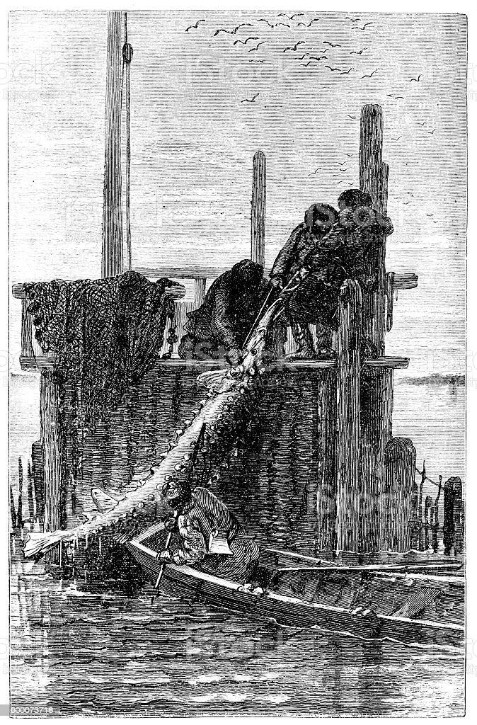 Sturgeon fishing: dragging fish in Volga's bank vector art illustration