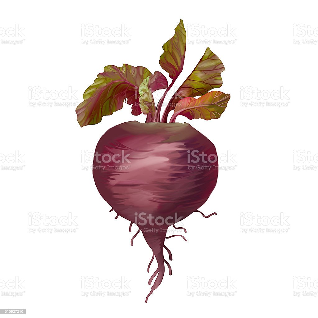 stylized beetroot raster illustration vector art illustration