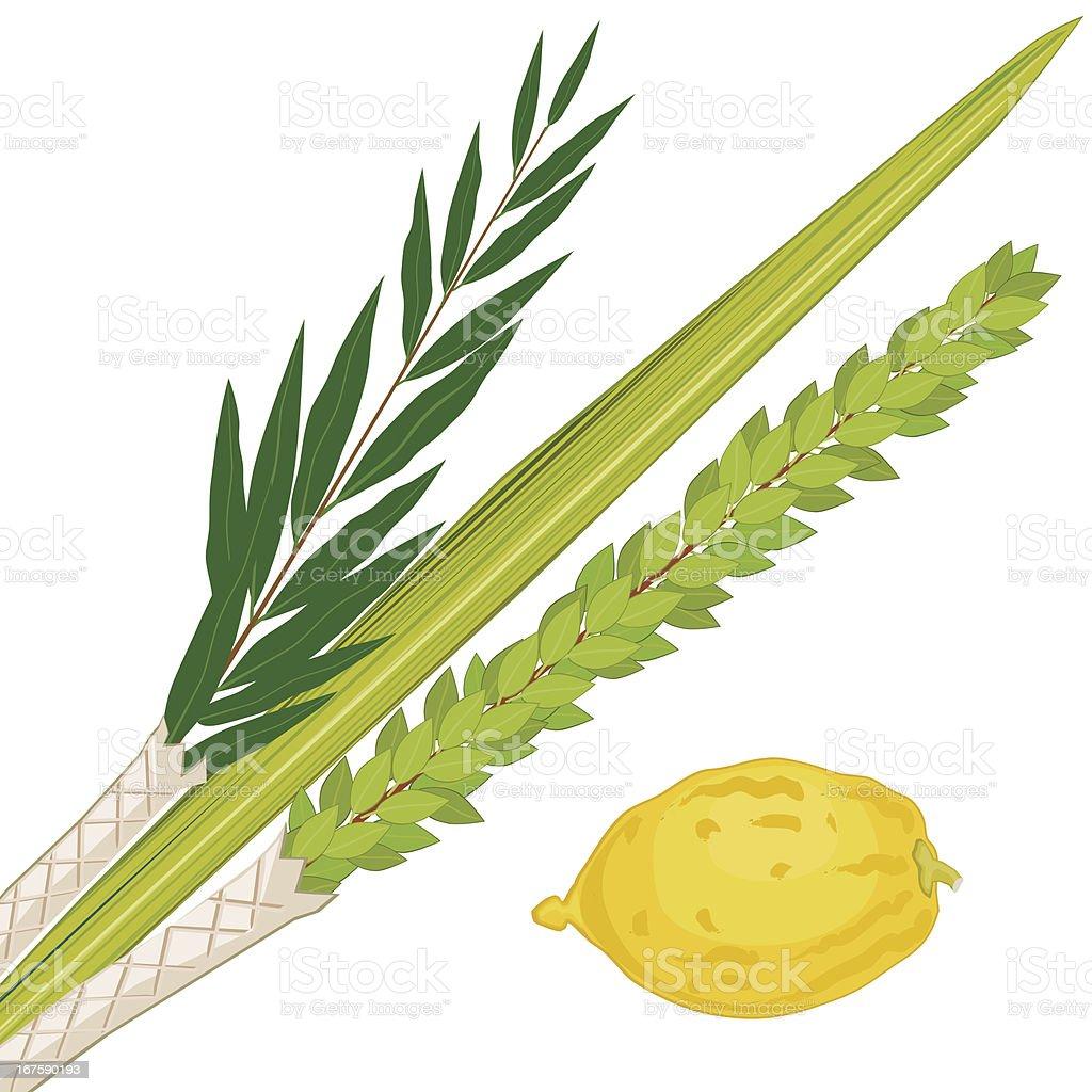 Sukkoth Plants vector art illustration