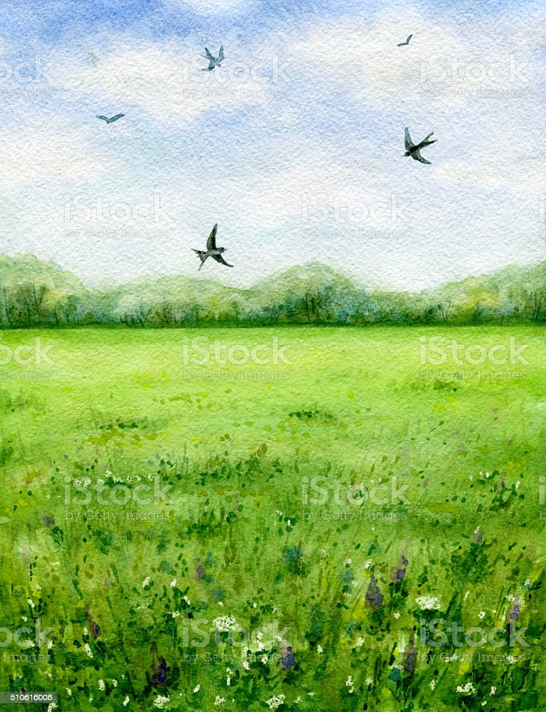 Summer view of the green meadow and flying birds. vector art illustration
