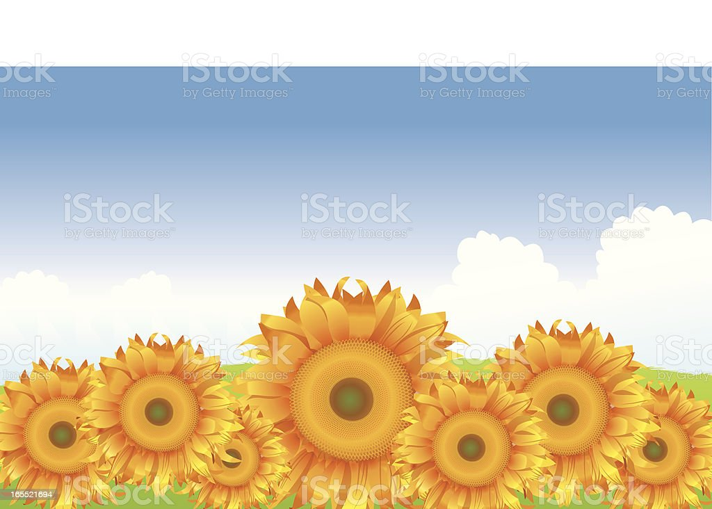 Sunflowers royalty-free stock vector art