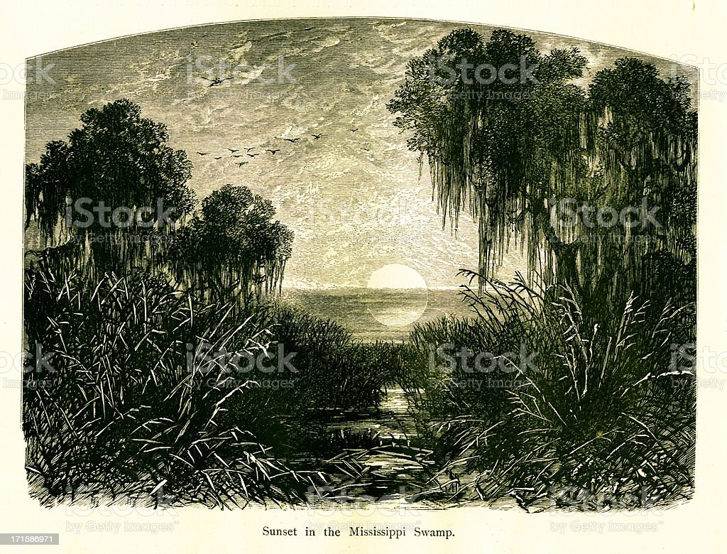 Sunset in Mississippi Swamp, USA royalty-free stock vector art