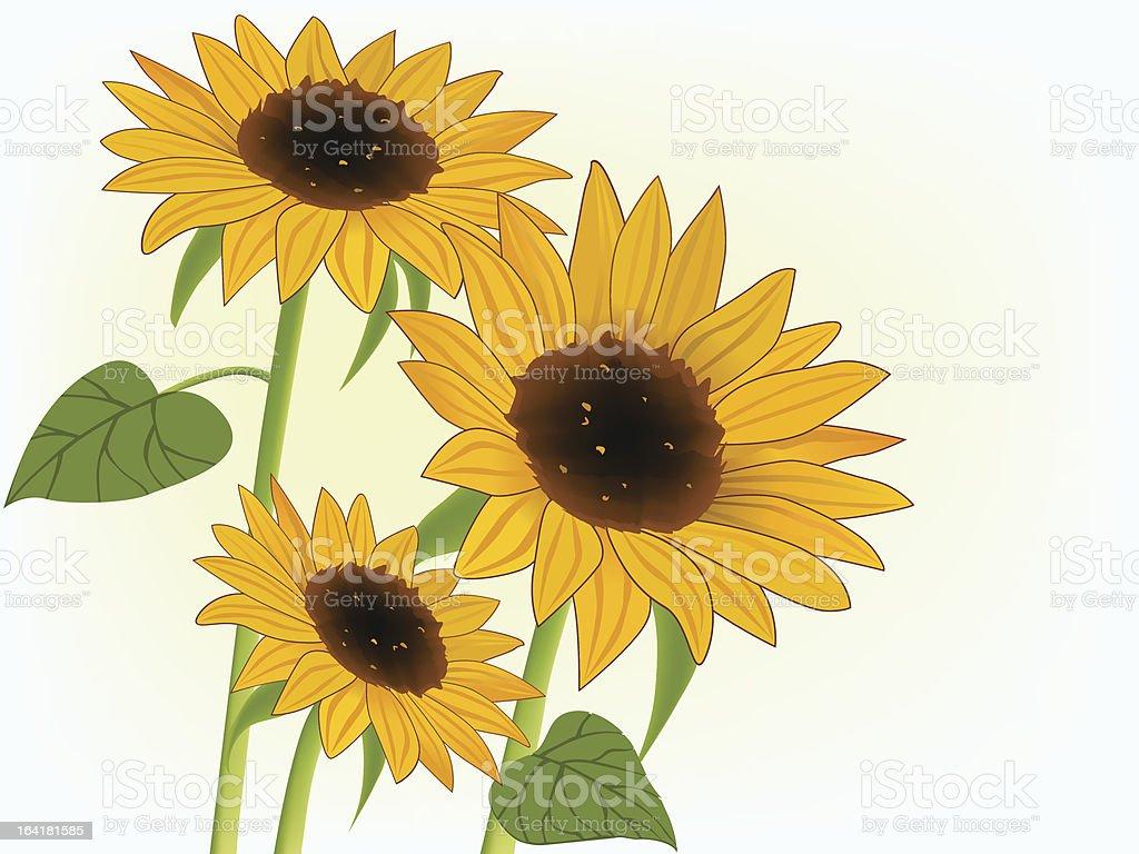 Sunward sunflower vector art illustration