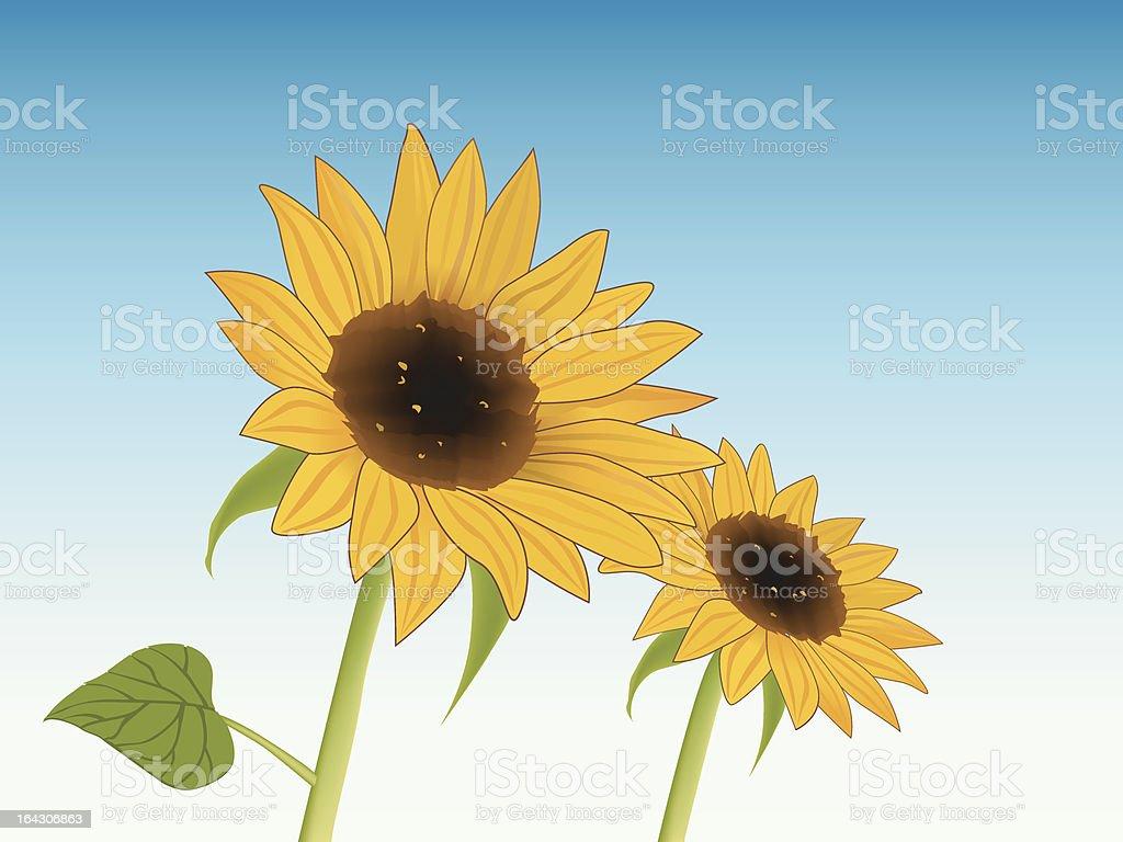 Sunward sunflower in blue sky vector art illustration