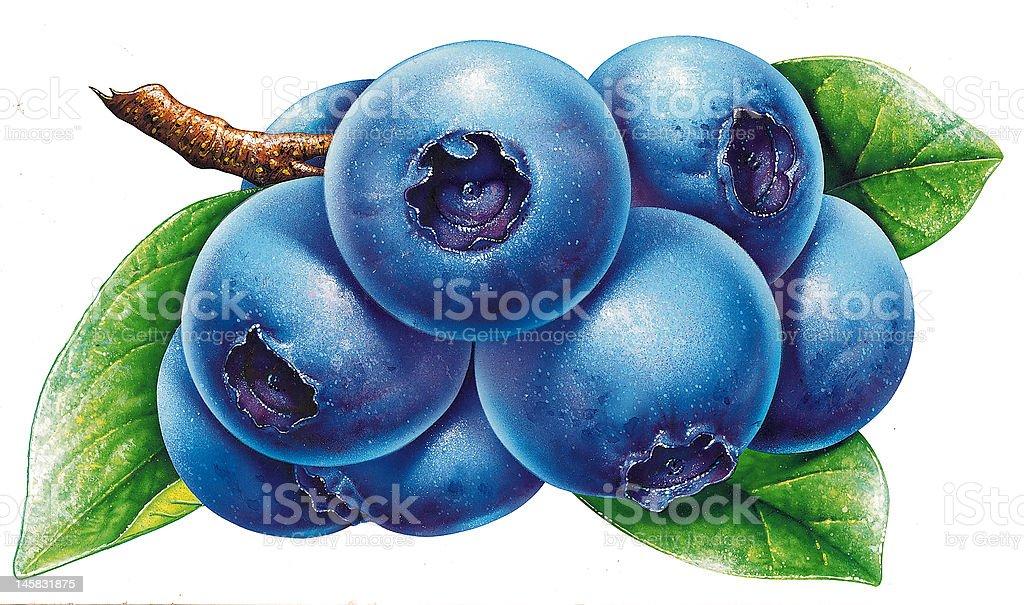 Super realistic illustration of Blueberry vector art illustration