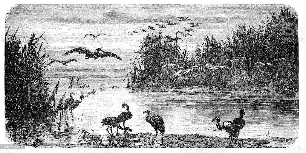 Swampland in Florida vector art illustration