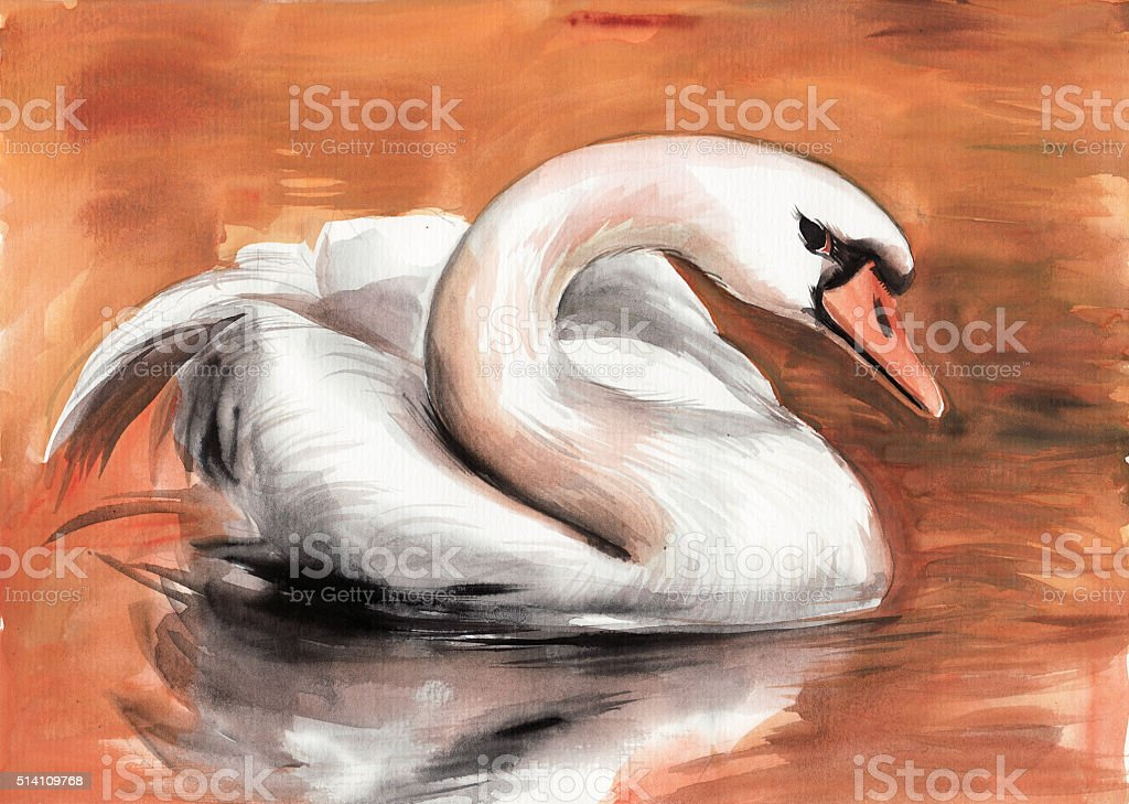 Swan vector art illustration